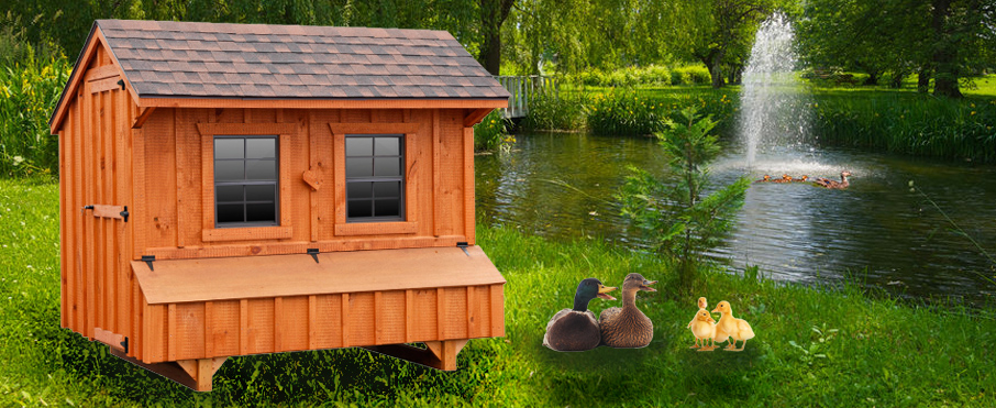 Duck houses duck coops for Chicken and duck coop